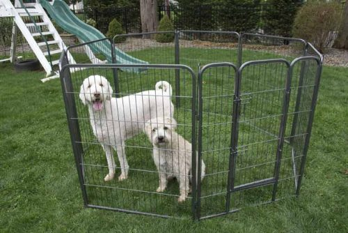 Iconic Pet 92147 24 in. Heavy Duty Metal Tube Pen Pet Dog Exercise & Training Playpen