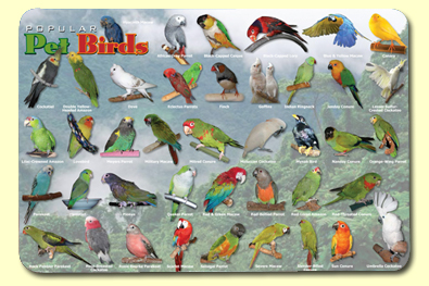 Painless Learning BIR-1 Popular Birds Placemat