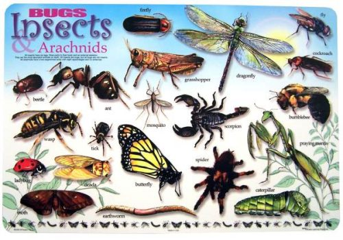 Painless Learning BUG-1 Bugs & Insects Placemat