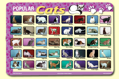 Painless Learning CAT-1 Popular Cats Placemat