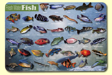 Painless Learning FWF-1 Freshwater Fish Placemat