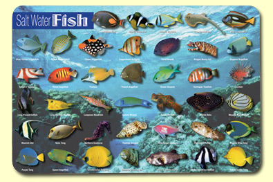 Painless Learning SWF-1 Saltwater Fish Placemat